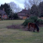 Weekend en Angleterre : La forêt enchantée de New Forest