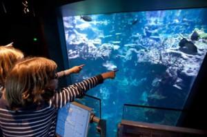 Groupe scolaires_expos et aquariums (2)