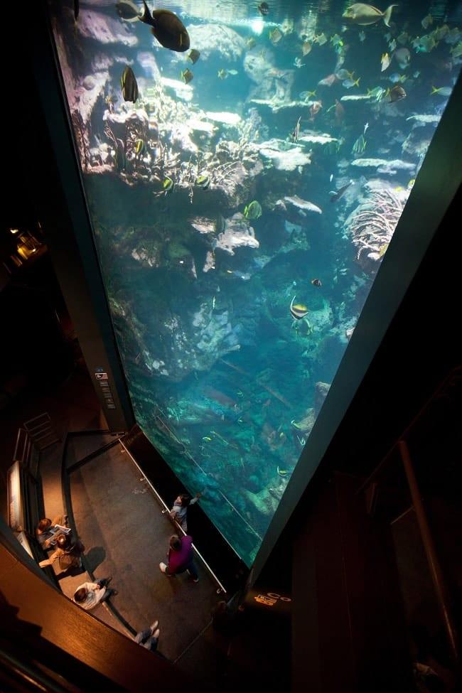 aquarium cité de la mer