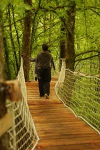 Sentier suspendu parc Wizztiti