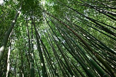 BAMBOUSERAIE-bambou