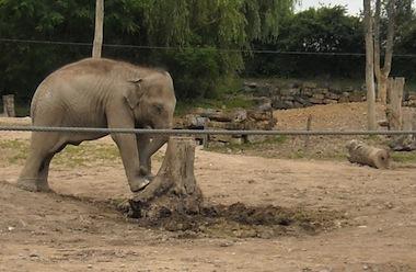 Le Pal bégé éléphant