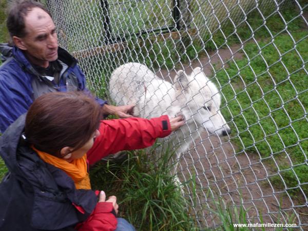 Parc Mahikan - On caresse les loups avec Gilles