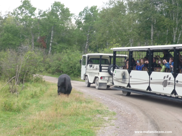 Zoo Saint-Félicien - Visite en petit train avec vue ours noir