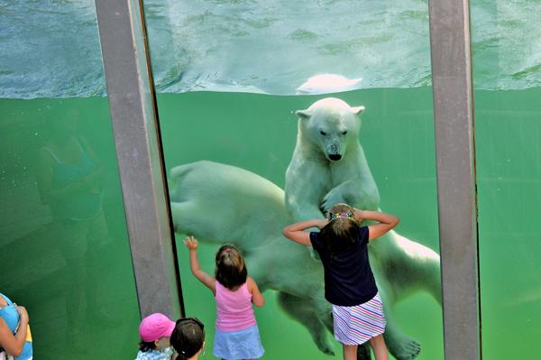 Zoo Saint-Félicien - Enfants devant bassin des ours blancs