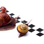 Organiser une course aux escargots !