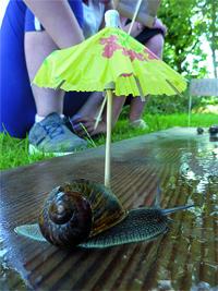 Protéger l'escargot du soleil et humidifier la planche