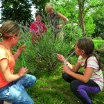 Capturer les insectes avec un aspirinsecte