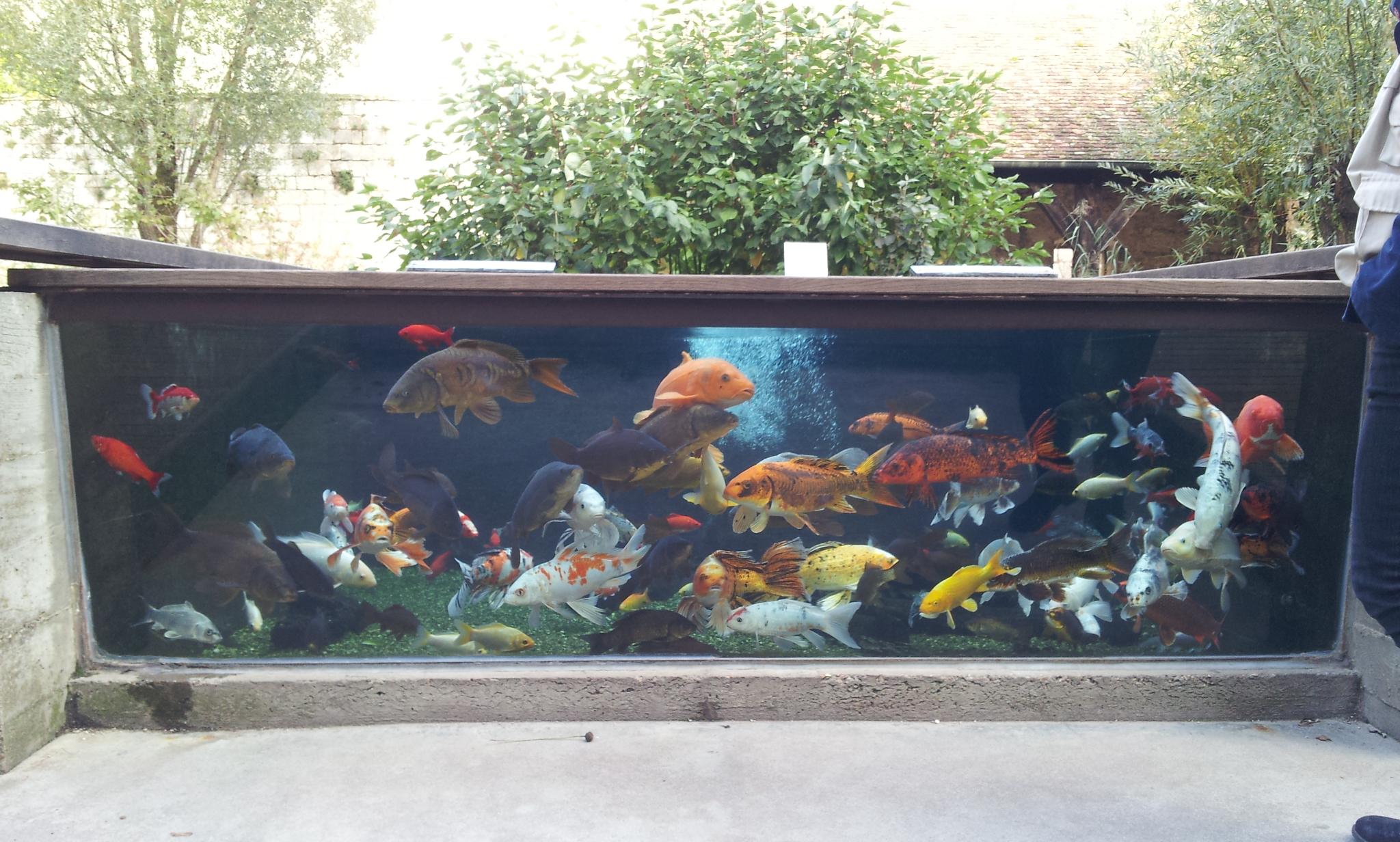 aquarium tactile citadelle besançon
