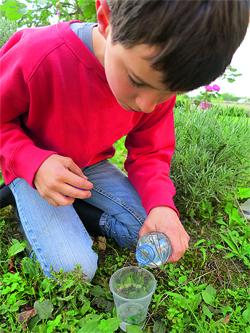 mettre la plante dans un gobelet avec de l'eau