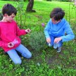 Plantes aromatiques : jouer aux odeurs