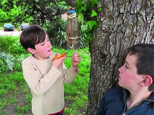 accrocher le refuge aux papillons dans un arbre