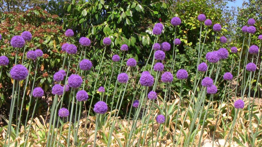 Terra Botanica - Au coeur des fleurs