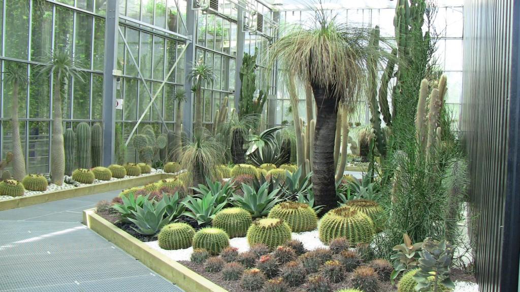 Terra Botanica - Cactus, les plantes de l'extrême