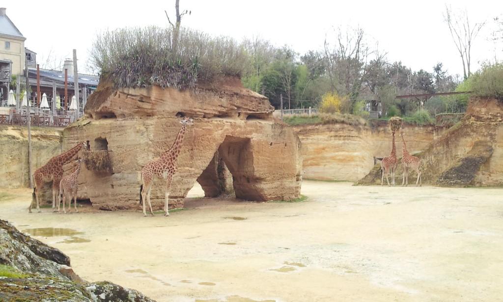 Zoo de Doué, enclos des girafes