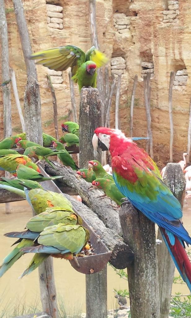 Zoo de Doué - volière