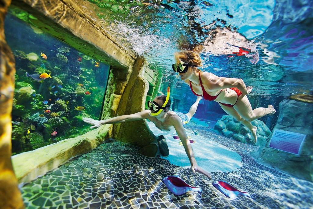plongée piscine vue aquarium au Domaine du Bois aux Daims