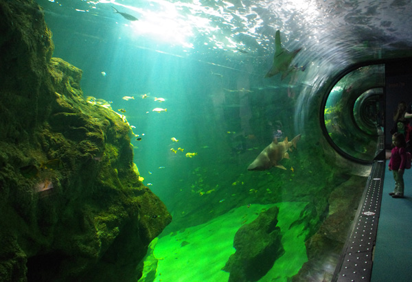 LA ROCHELLE- Aquarium -CMT17 A. BIRARD-6