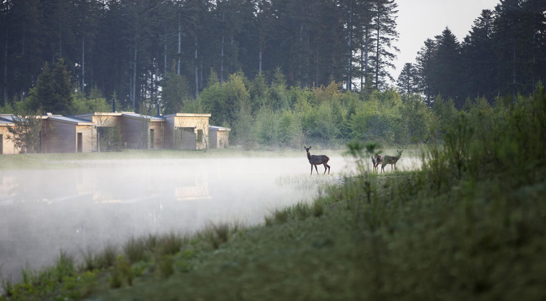 Le Bois Aux Daims Un Nouveau Center Parcs Dans La Vienne