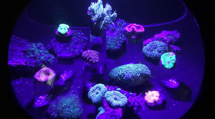 aquarium_la_rochelle_galerie_des_lumieres_coraux