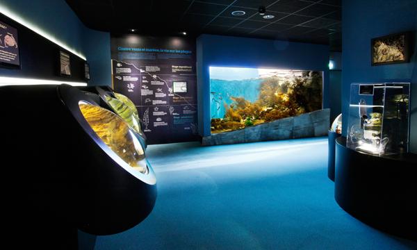 espace littoral aquarium la rochelle
