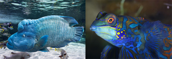 poissons-aquarium-la-rochelle