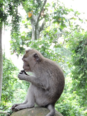 la forêt des singes à Bali