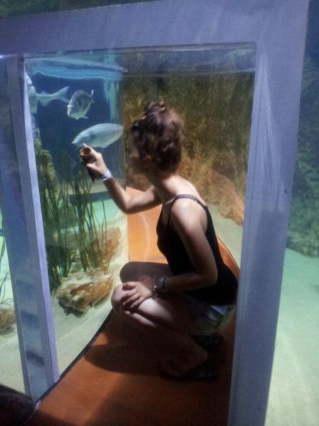 Aquarium_de_Malte_tunnel_de_verre_et_deau
