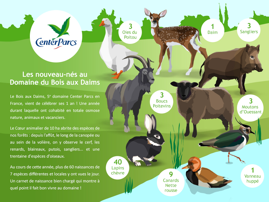 infographie-naissances-center-parcs-bois-aux-daims