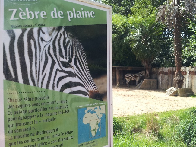 zoo_asson_zebre