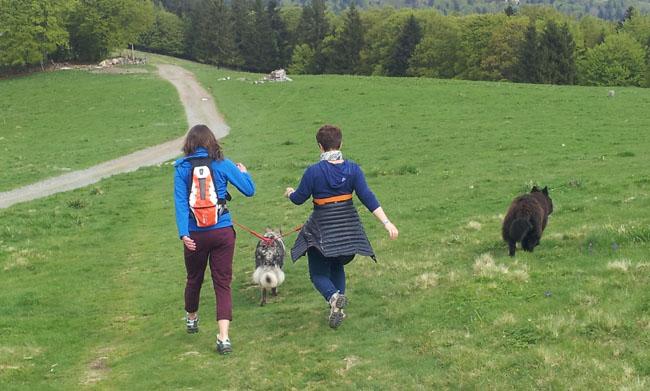 cani rando sur le Col du Ballon des Vosges