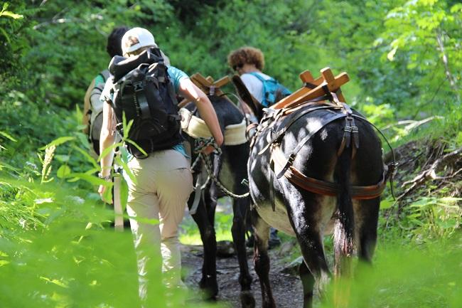 Randonnée en famille et en ânes à la montagne l'été