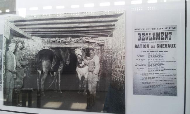 images-archives-mineurs-avec-cheval-dans-galerie