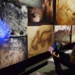 Espèces d'ours au Muséum national d'Histoire naturelle de Paris
