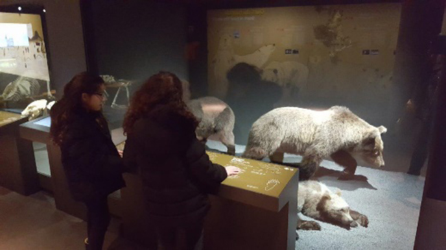 expo-especes-d-ours-en-famille