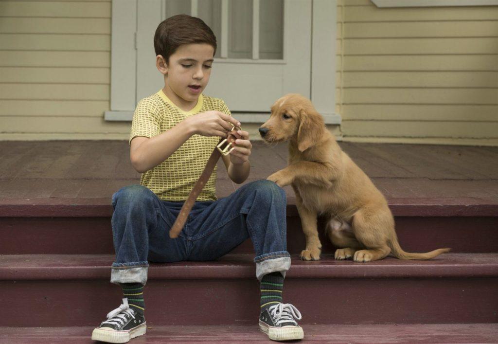 Mes vies de chien, le jeune Ethan joue avec son jeune golden retriever Bailey