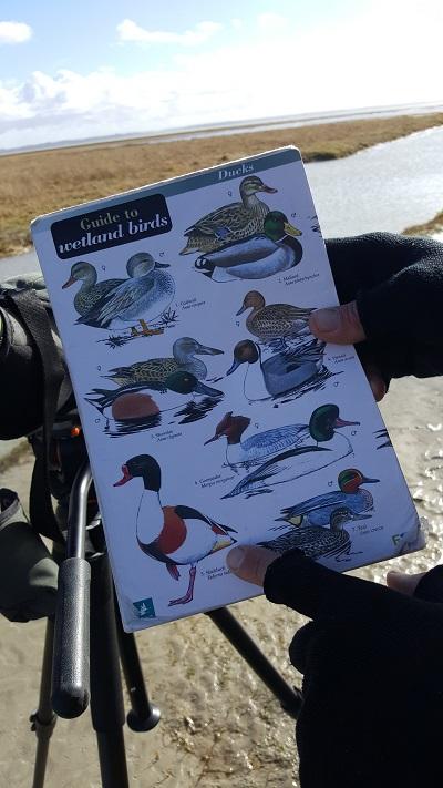 sortie-nature-observation-des-oiseaux-en-baie-de-somme