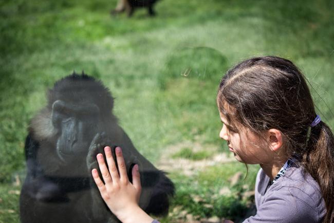 Thoiry-rencontre-avec-un-singe