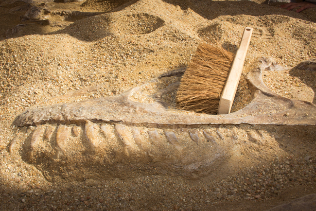 Thoiry-site-de-fouilles-archelogiques-dinosaure