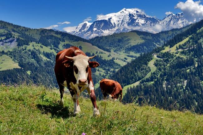 Val d'Arly, vue sur Mont-Blanc depuis alpages