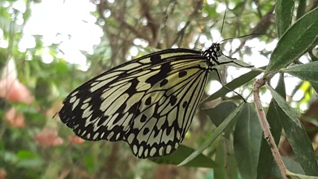 La Grange aux papillons à Virelles