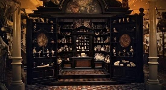 cabinet de curiosités dans le musée des merveilles