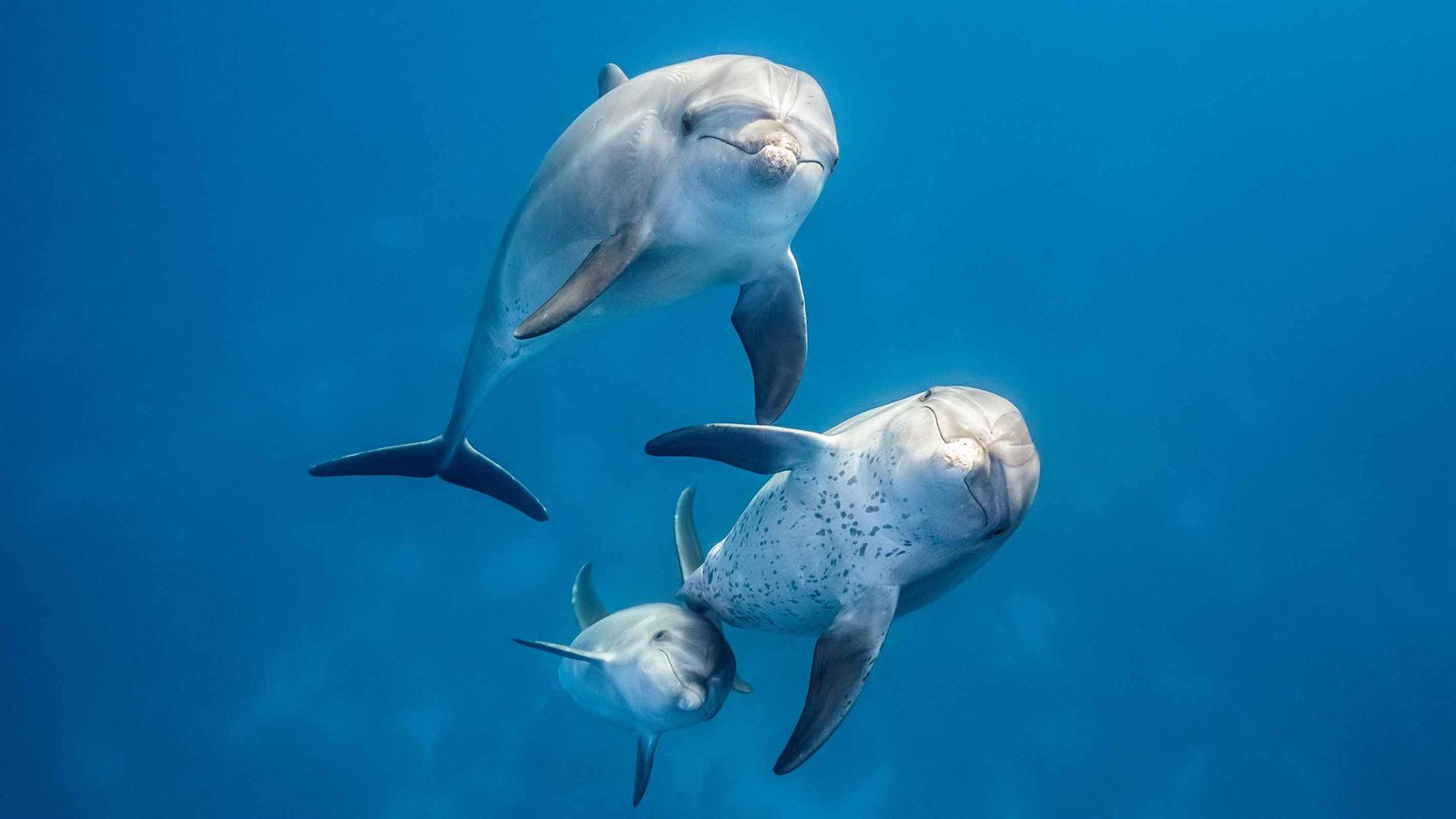 Blue le jeune dauphin et sa maman