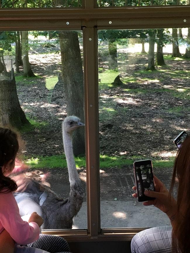Zoosafari de Thoiry