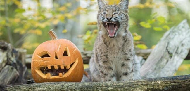 Halloween au Parc animalier de Sainte Croix