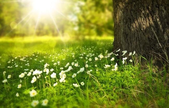 se balader dans la nature pour renouer apaiser les tensions avec son ado