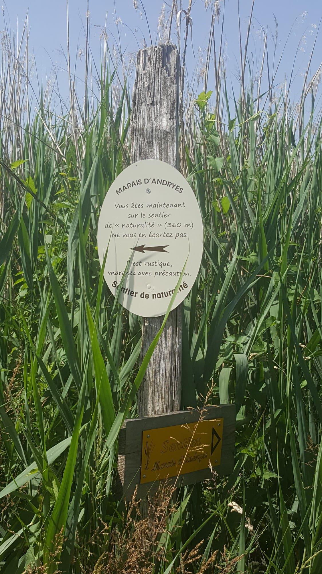 marais d'Andryes dans l'Yonne