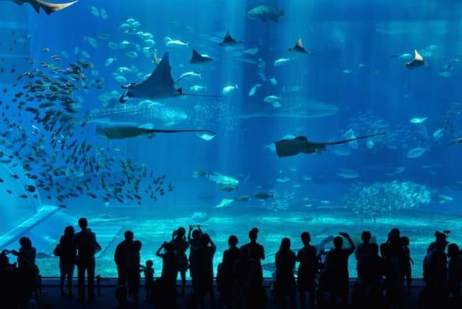 Japon avec ses enfants aquarium okinawa