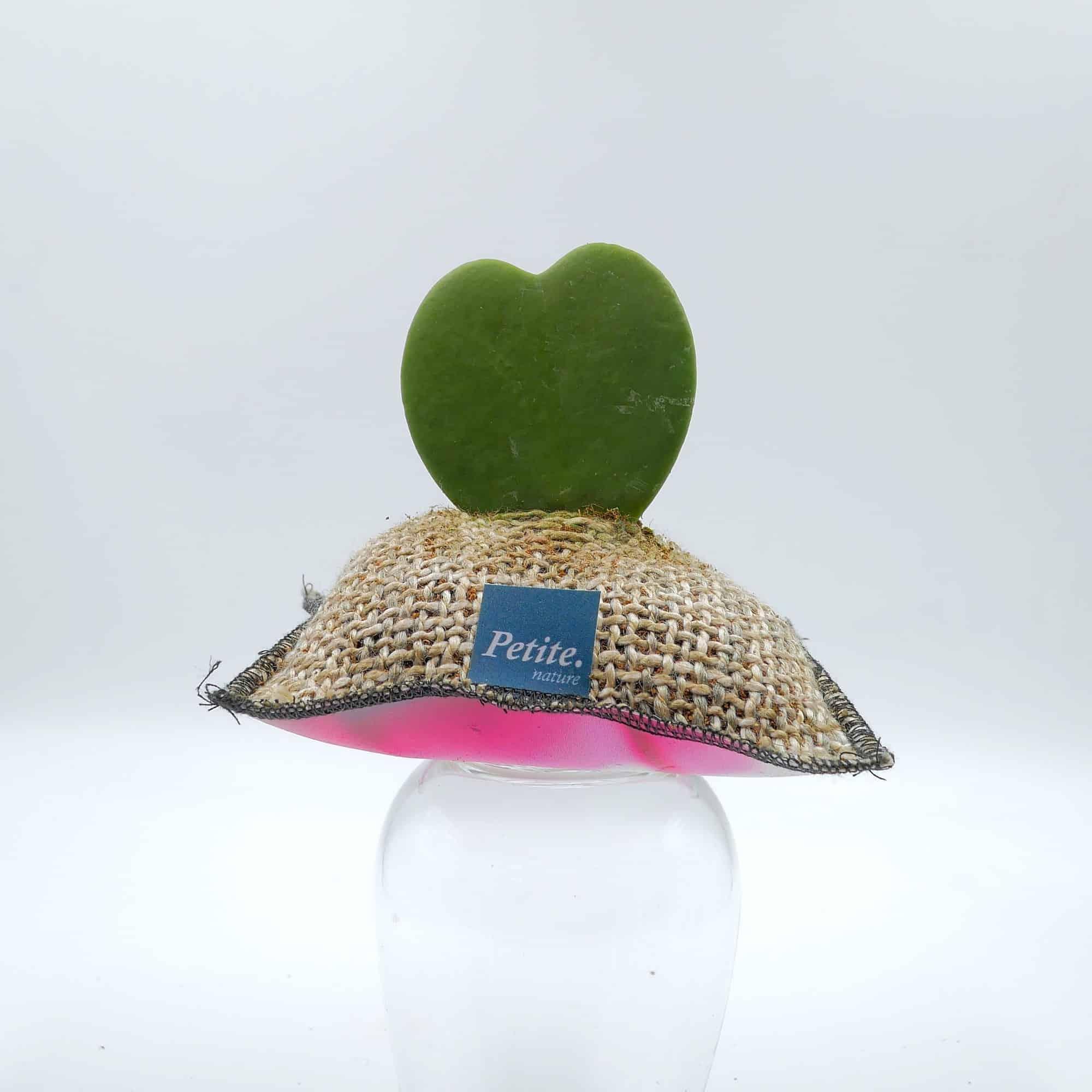 Petite nature plantée cactus