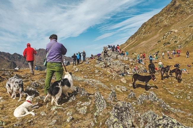 PNR des Pyrénées Ariégeoises, rando en ânes